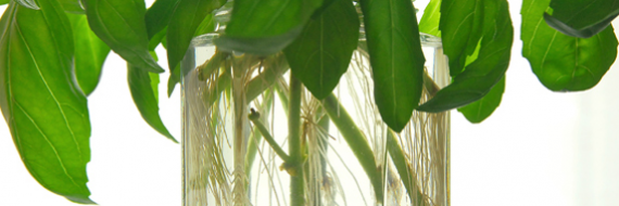 Energiebeleid, duurzaamheid en groene groei